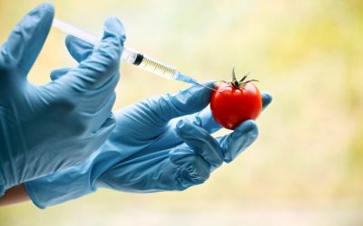 TOP 10 MOST COMMON GENETICALLY MODIFIED FOODS